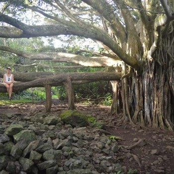 Hana-Top-5-Banyan-Tree