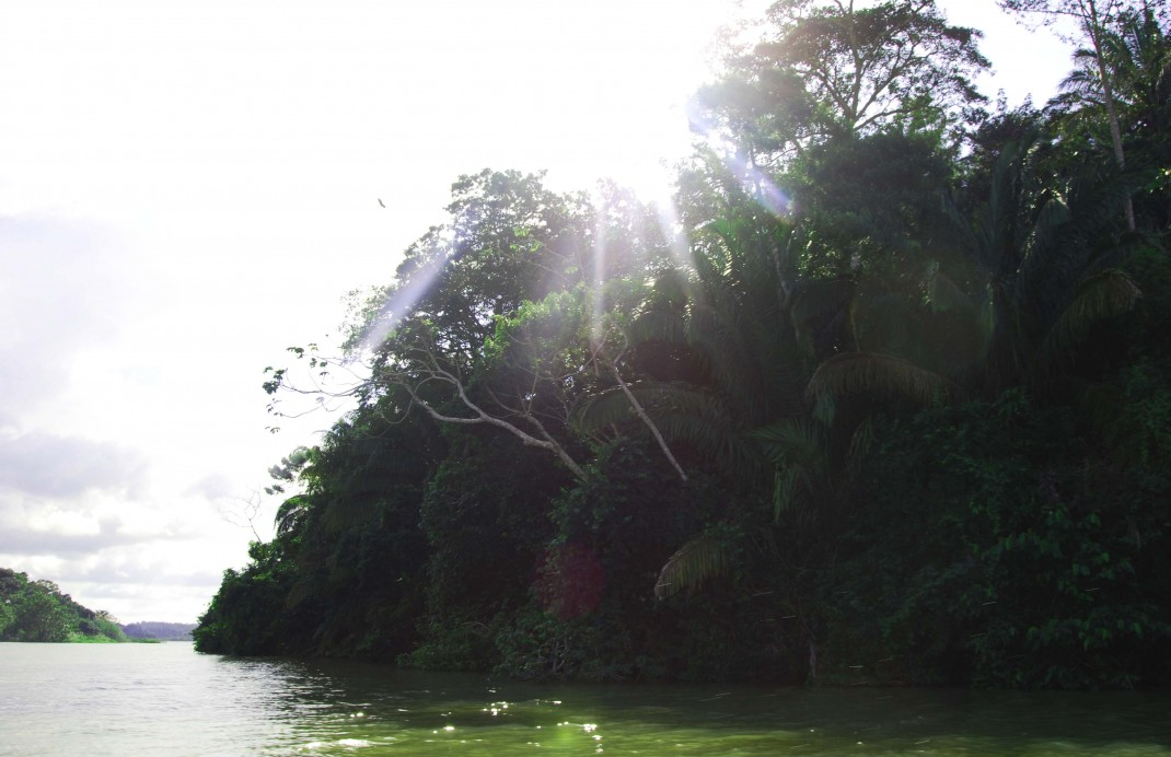 Jungle at Lake Gatun, Panama Canal