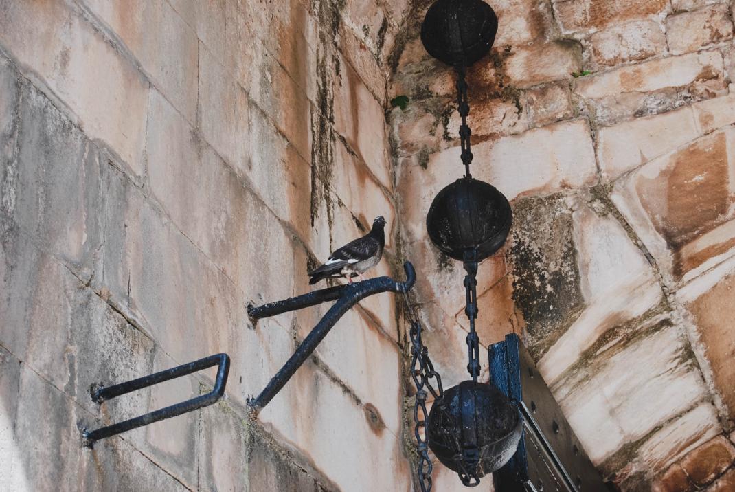 Kanonenkugeln und Tauben sitzen in einer Nische der Stadtmauer von Dubrovnik