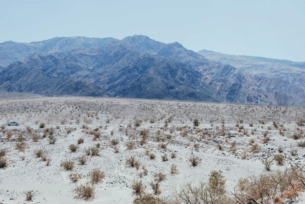Vegetation im Death Valley Nationalpark