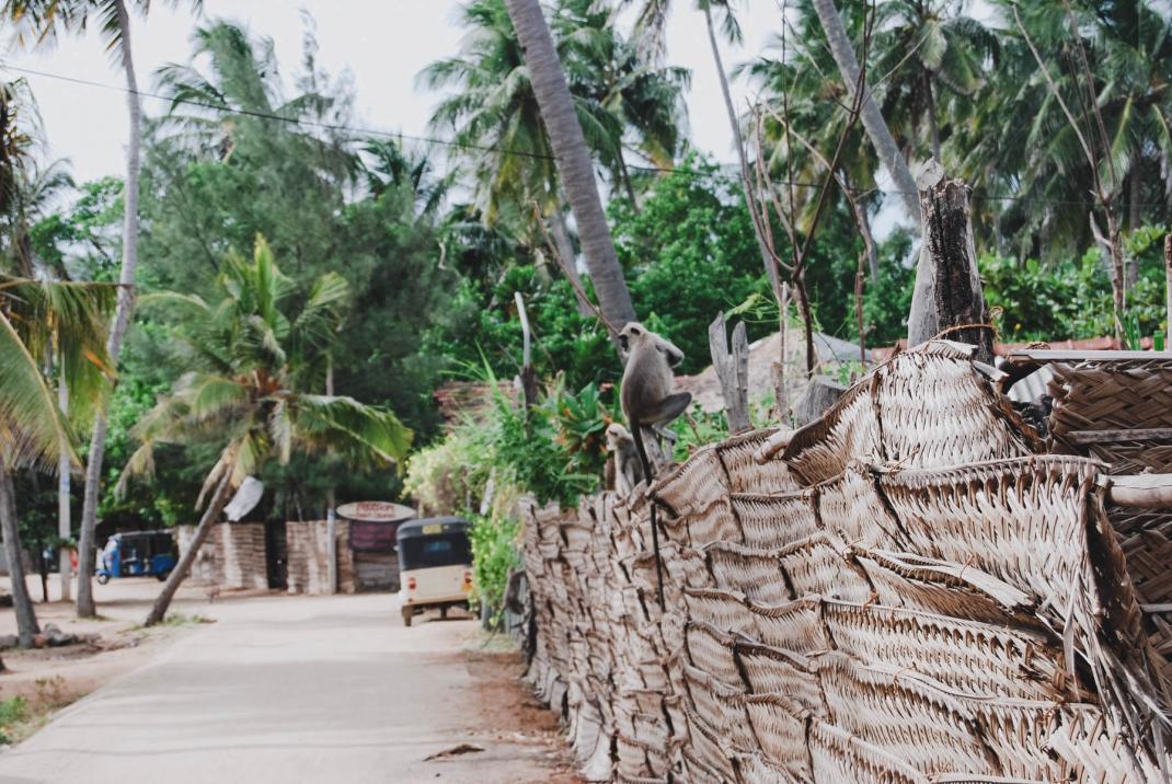 Arugam Bay Sri Lanka Affen auf einer Mauer