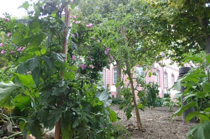 Insight-Stadtgarten