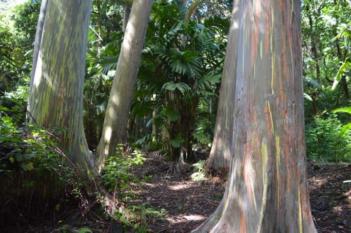 Hana-Top-five-Arboretum