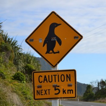 Penguin warning sign in New Zealand