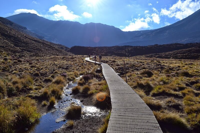 A hiking path in New Zealand through a damp