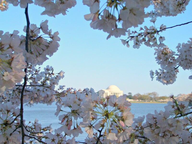 Geheimtipps für Washington D.C. Kirschblüte-Washington