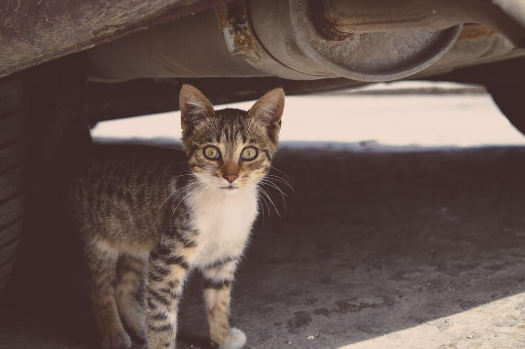 Katze unter einem Auto in Sofia Bulgarien