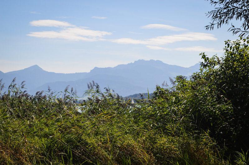 Blick auf den Chiemsee vom Radweg aus