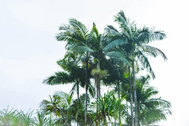 Hawaii-Urlaub planen Palmen