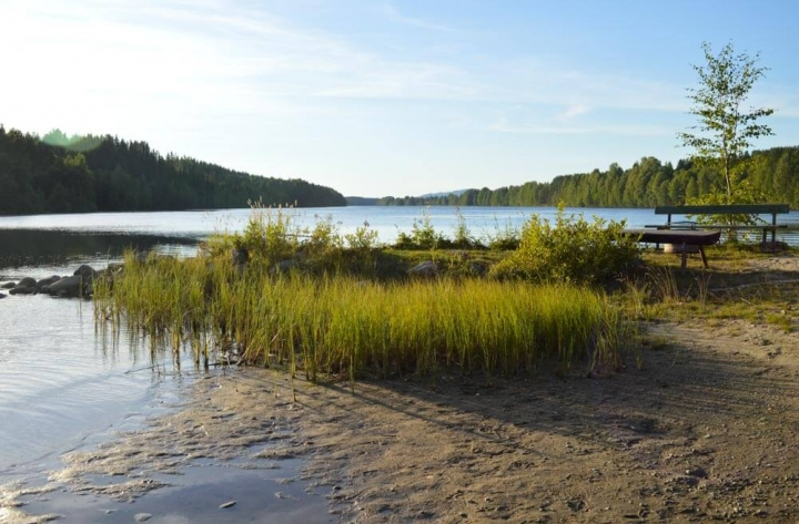 Umeälven-Bucht Granö Beckasin Nordschweden