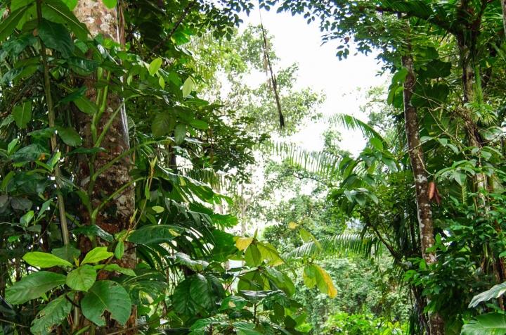 Wanderung durch den Sinharaja Forest Sri Lanka Blick ins Bläterdach