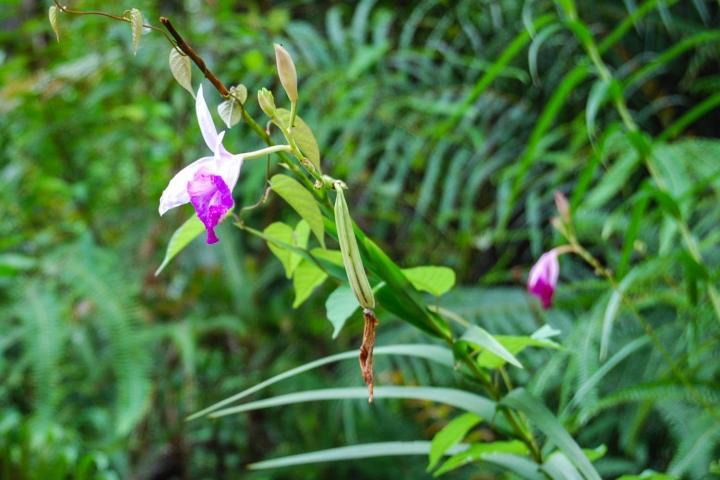 Wanderung durch den Sinharaja Forest Sri Lanka Blumen