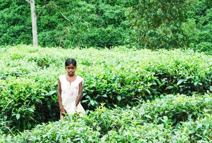 Wanderung durch den Sinharaja Forest Sri Lanka-Teepflückerin vor dem eingang