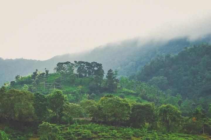 Wanderung durch den Sinharaja Forest Sri Lanka Wolkenverhangene Hügellandschaft