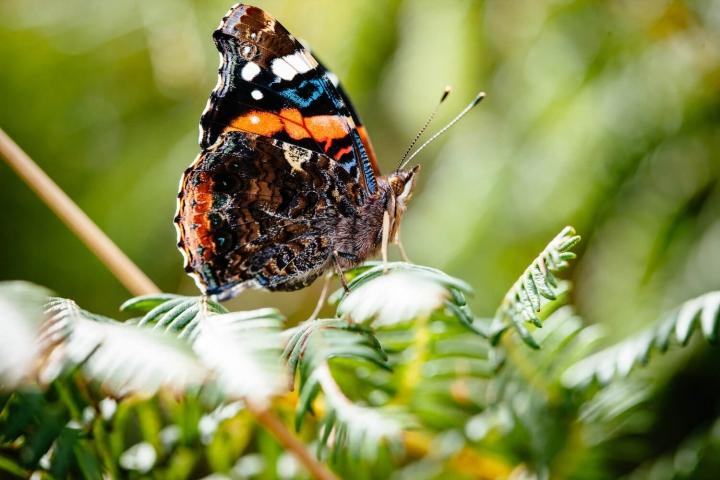 Aktivurlaub auf Jersey Foto Visit Jersey Schmetterling