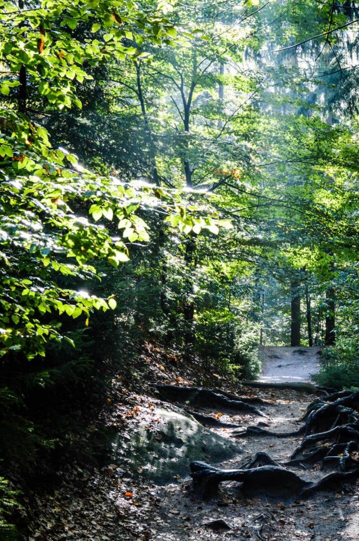 highlights-der-sachsischen-schweiz-sonne-und-nebel-im-wald