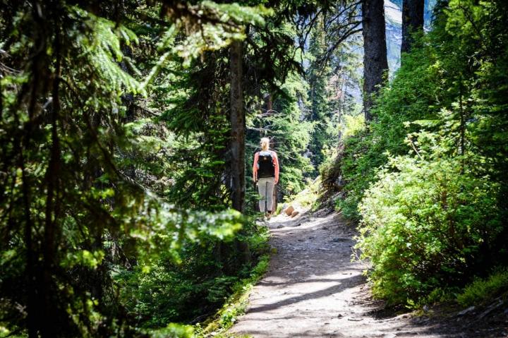 Wanderung durch den Wald im Banff National Park um den Lake Louise zum Plain of Six Glaciers