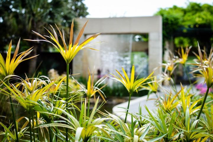 Dallas Texas Miniguide Sightseeing Blumen im Arboretum