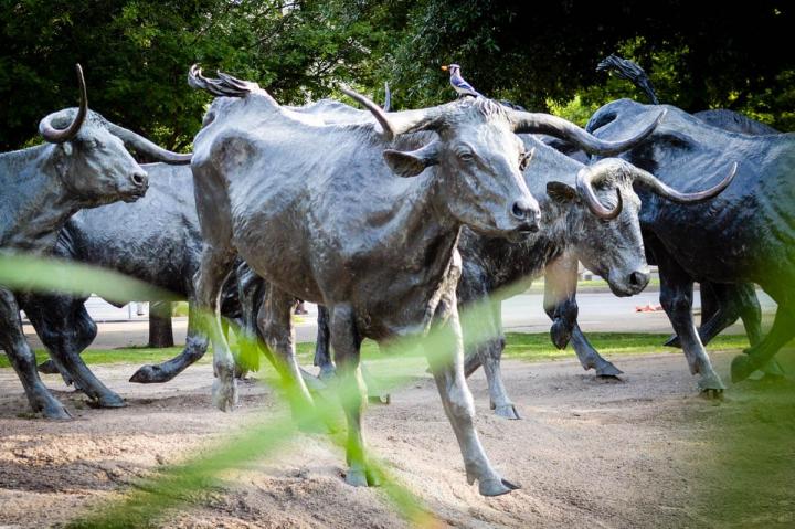 Dallas Texas Miniguide Sightseeing Pioneer Plaza Cowboy Viehtrieb