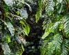 Inselhopping-Guide Hawaii Welche Insel ist die richtige für dich Big Island Pflanzen im botanischen Garten