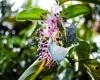 Inselhopping-Guide Hawaii Welche Insel ist die richtige für dich Big Island tropische Blütenpflanze