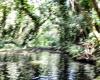 Inselhopping-Guide Hawaii Welche Insel ist die richtige für dich Kauai An der Liane ins Wasser