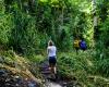 Inselhopping-Guide Hawaii Welche Insel ist die richtige für dich Kauai Dschungelwanderung