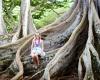 Inselhopping-Guide Hawaii Welche Insel ist die richtige für dich Kauai Jurassic Park Trees