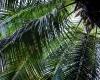Inselhopping-Guide Hawaii Welche Insel ist die richtige für dich Kauai Palme im botanischen Garten