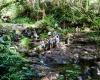 Inselhopping-Guide Hawaii Welche Insel ist die richtige für dich Kauai Picknickplatz