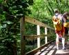 Inselhopping-Guide Hawaii Welche Insel ist die richtige für dich Kauai Wanderung durch den Dschungel