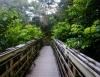 Inselhopping-Guide Hawaii Welche Insel ist die richtige für dich Maui Holzbrücke