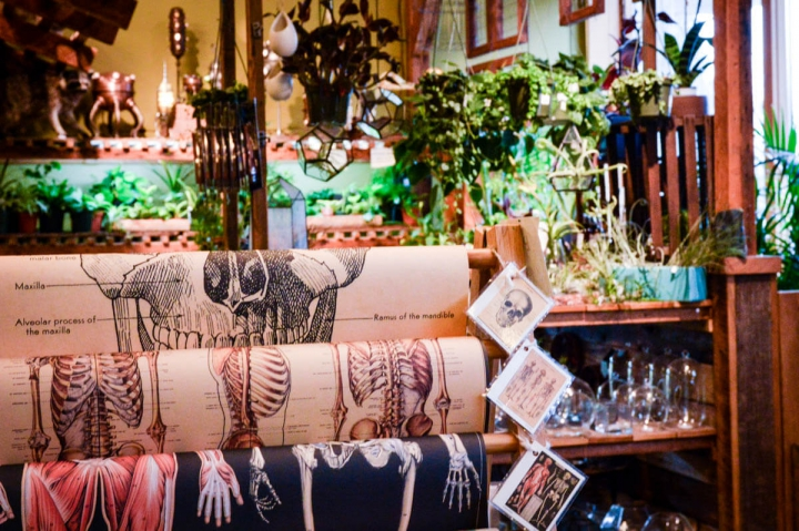 Portland Oregon Tipps Auslage im Shop Paxton Gate Mississippi Avenue