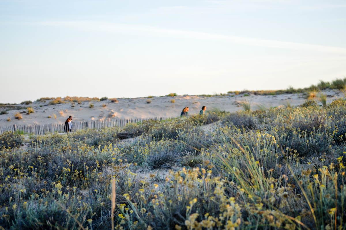 Abendstimmung in den Dünen bei Le Porge Océan