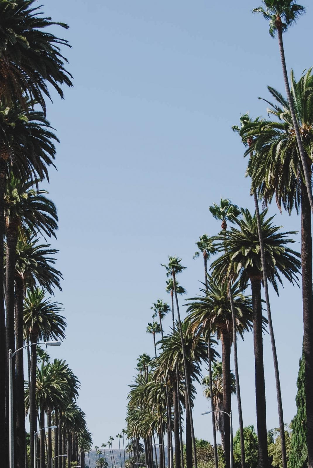 Kalifornien Beverly Hills Palmen