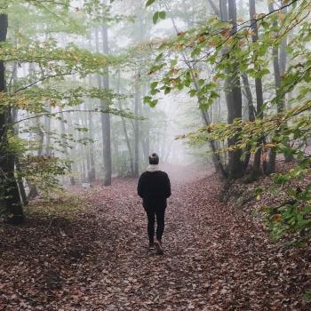 Nach Hause kommen Waldspaziergang bei Rüdesheim im Herbst mit Nebel