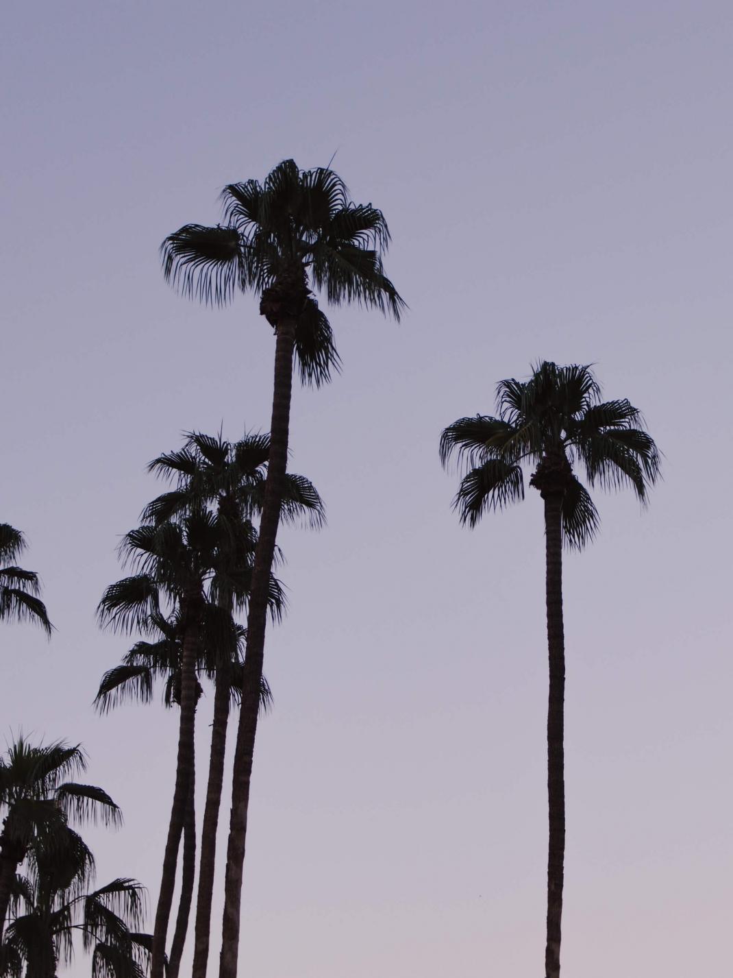 Palmen im Sonnenuntergang Los Angeles Kalifornien