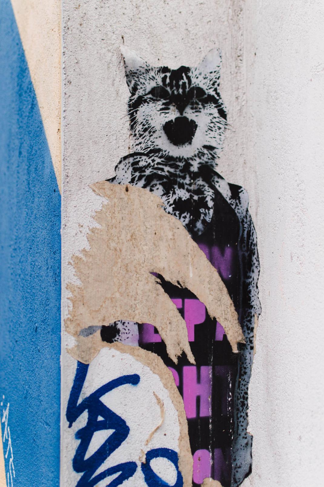 Köln Street Art Guide Meow Katze