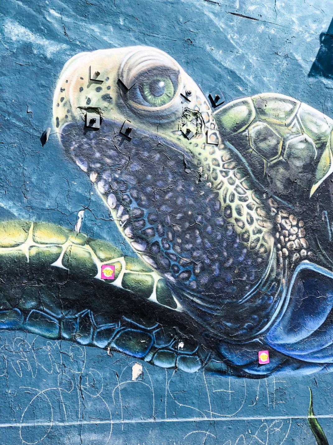 Street Art Guide Köln Schildkröte