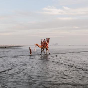 Backpacking in Pakistan Bunt geschmückte Kamele an einem Strand im Süden Pakistans Foto: Anne Steinbach und Clemens Sehi